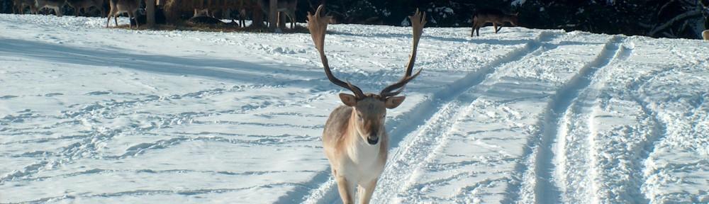 Deer Whispering